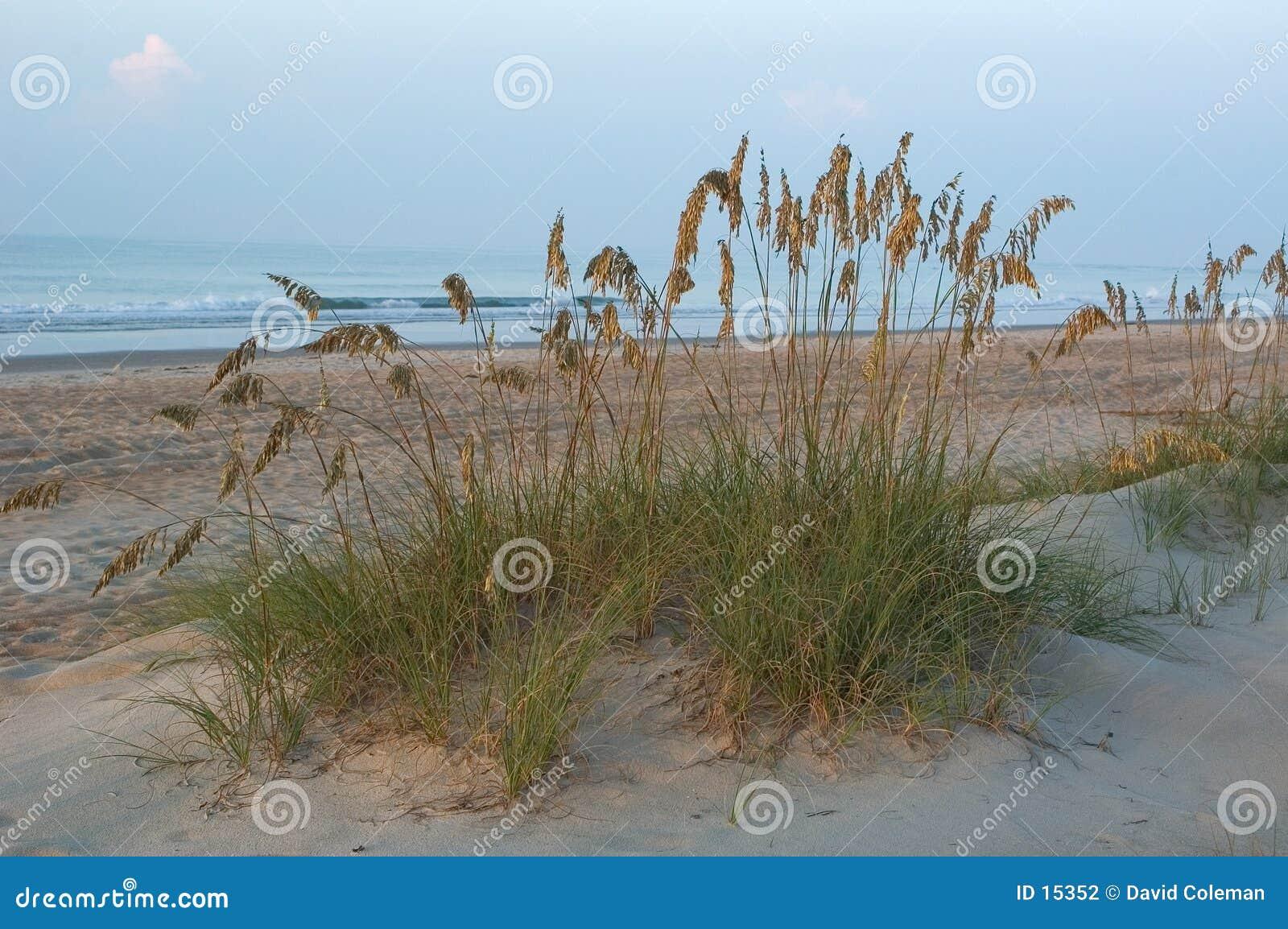 Grama nas dunas