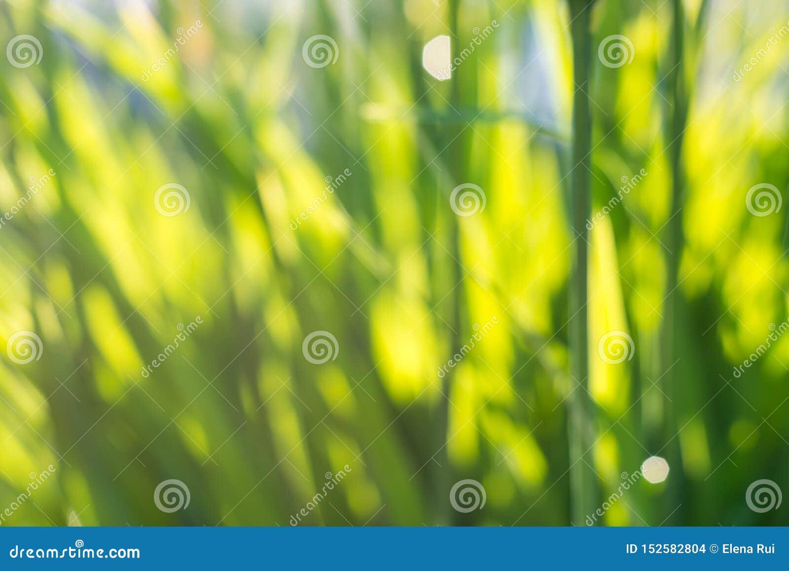 Grama nova suculenta fresca na natureza nos raios de luz solar com um bokeh e um joaninha efervescentes bonitos em um macro verde