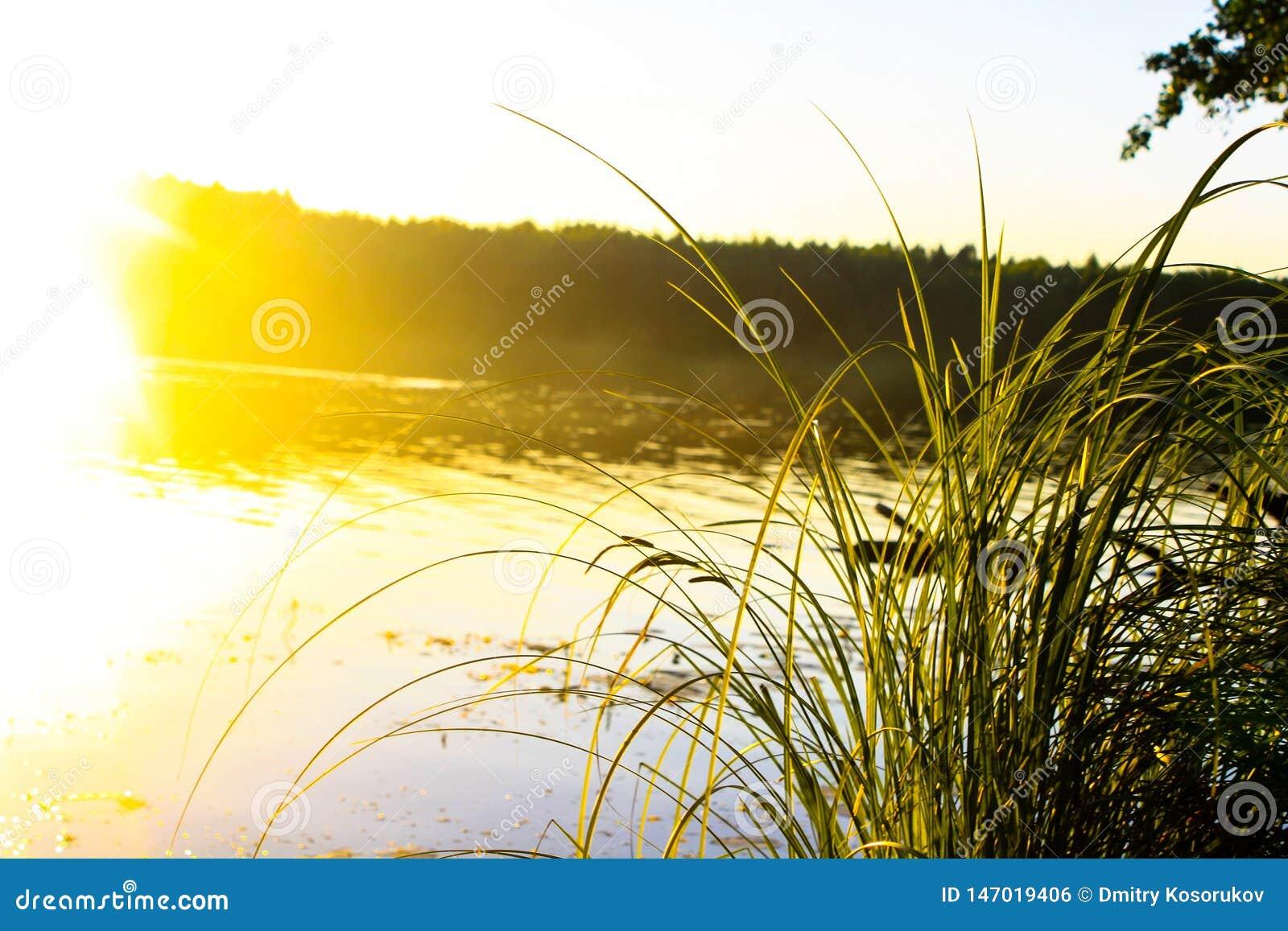Grama perto do rio na luz solar