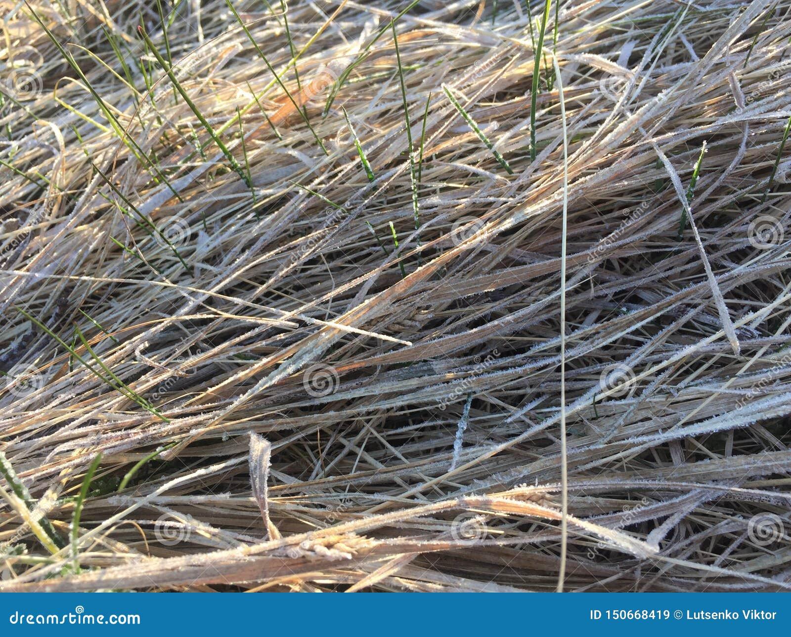Grama seca com alguma grama nova verde