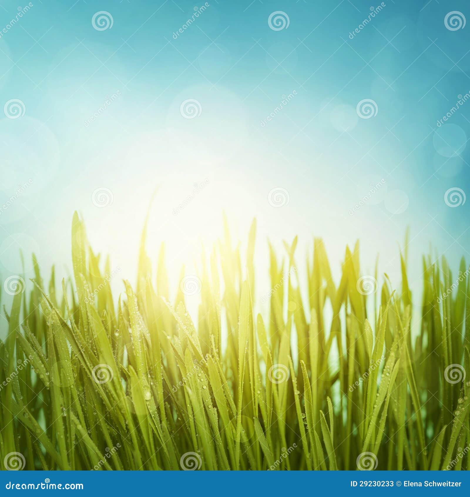 Download Grama verde imagem de stock. Imagem de verde, grama, céu - 29230233