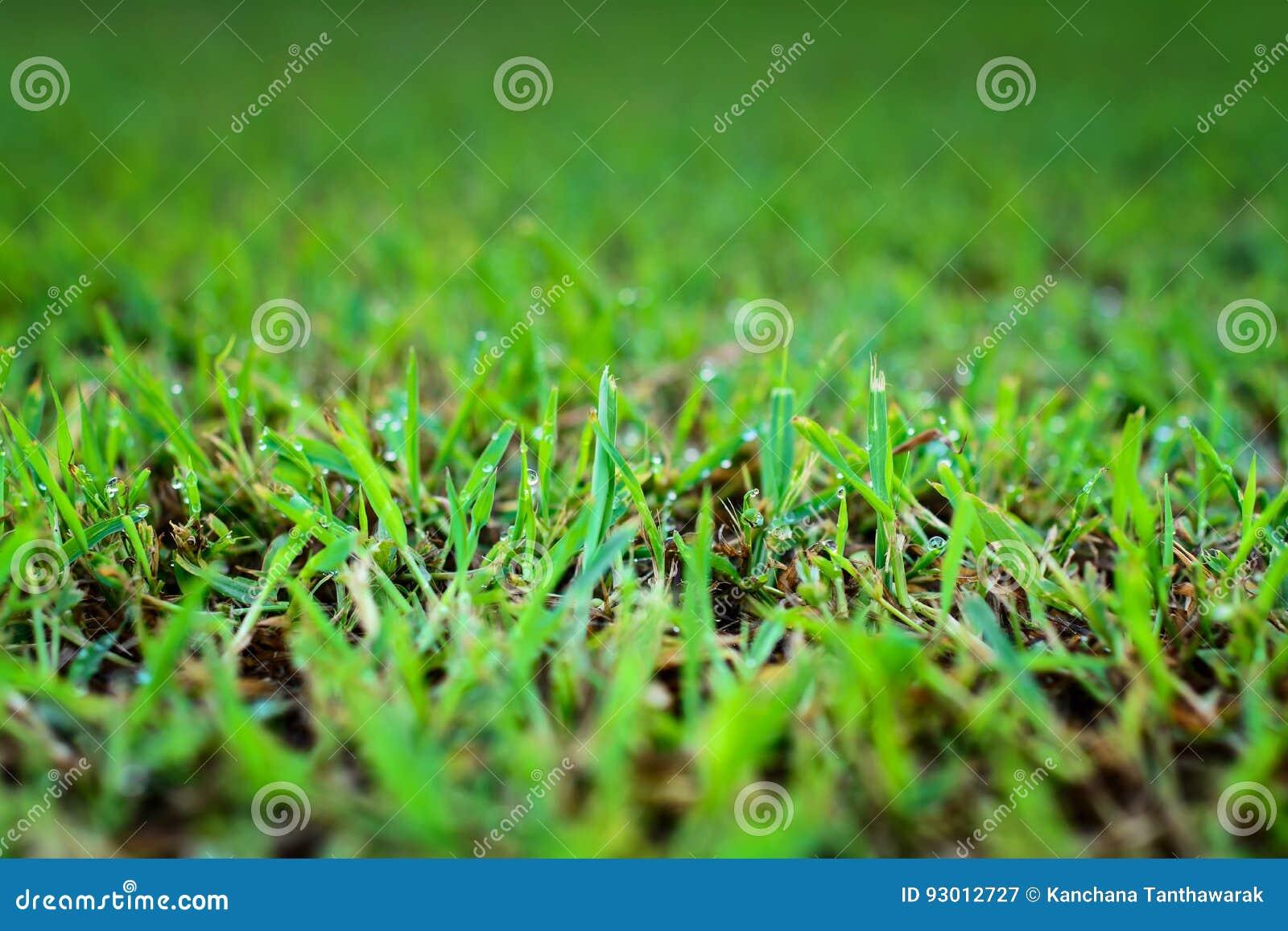 Grama verde abstrata de fundos naturais