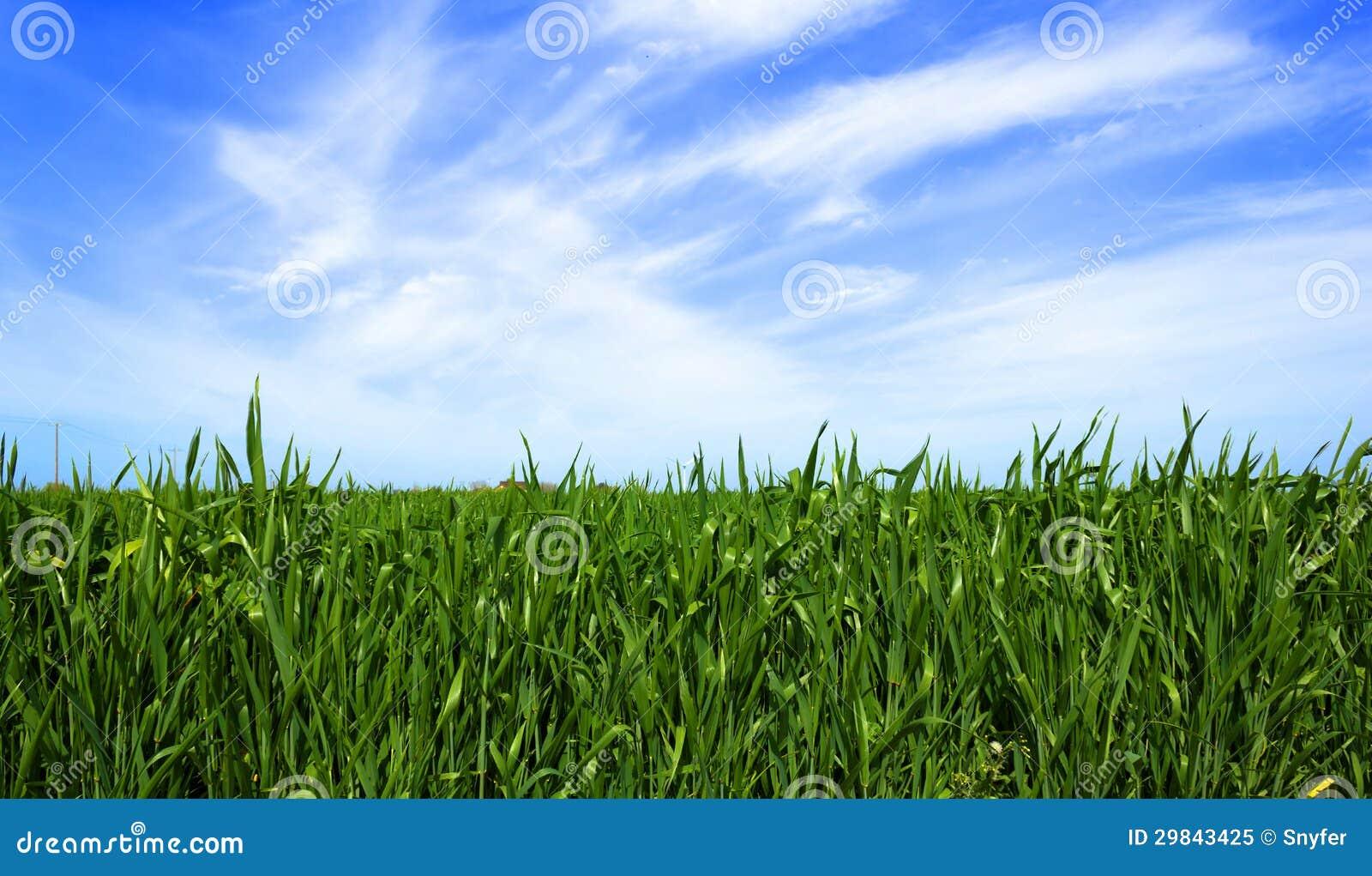 Fundo verde do gramado