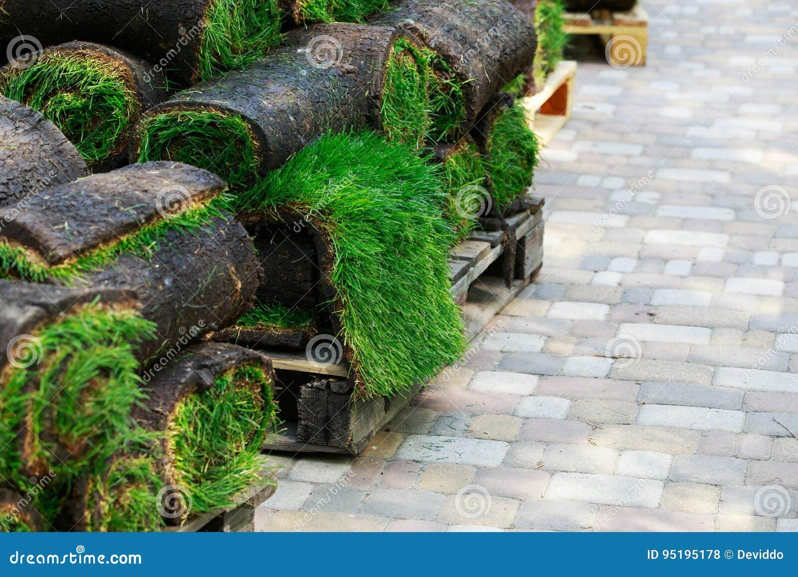 Grama verde do gramado nos rolos