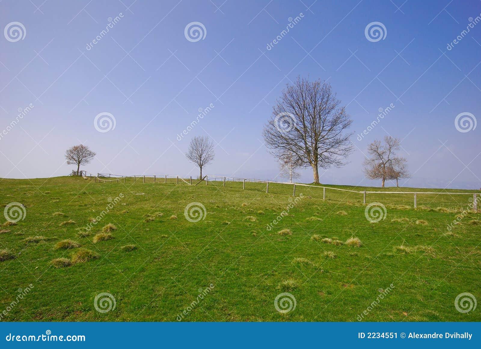 Grama verde e céu azul da árvore