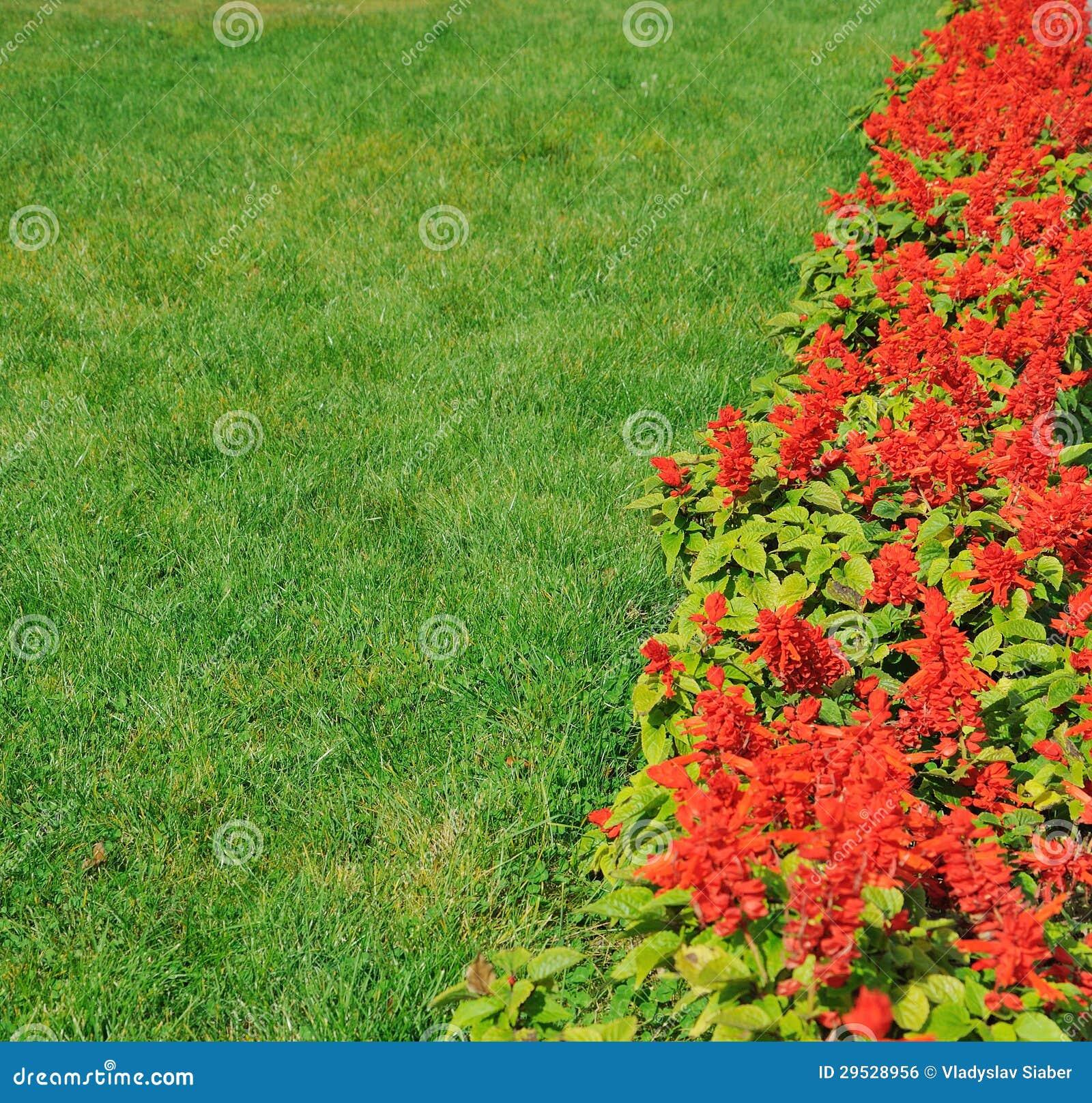 Grama verde e flores vermelhas