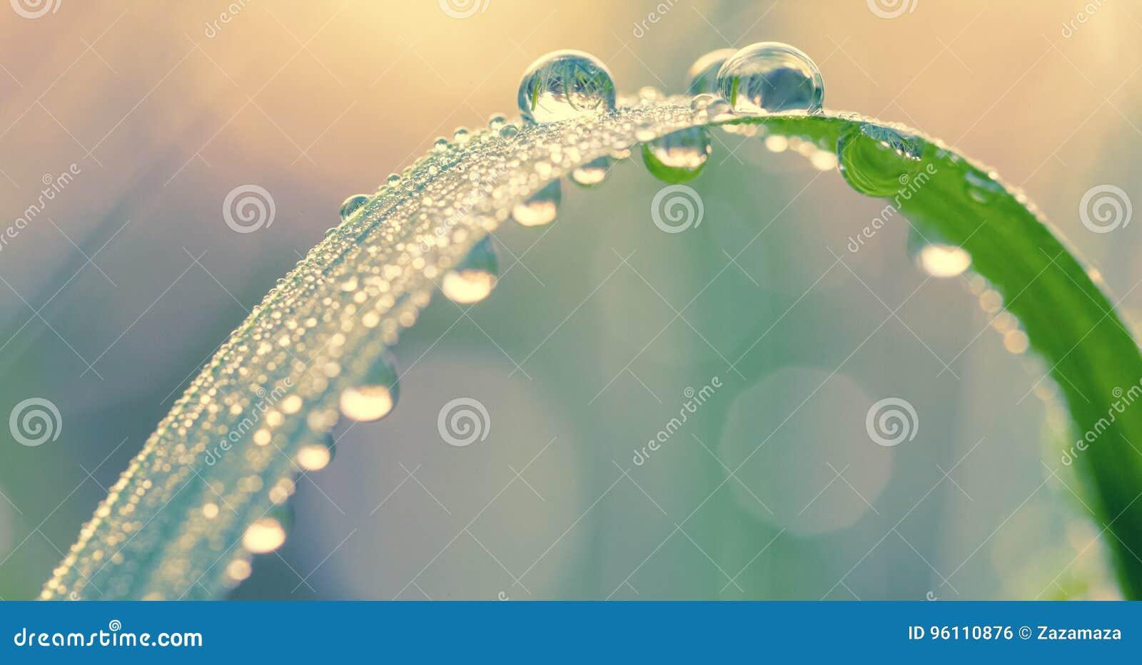 Grama verde fresca com gotas de orvalho no fim da manhã acima Fundo da natureza