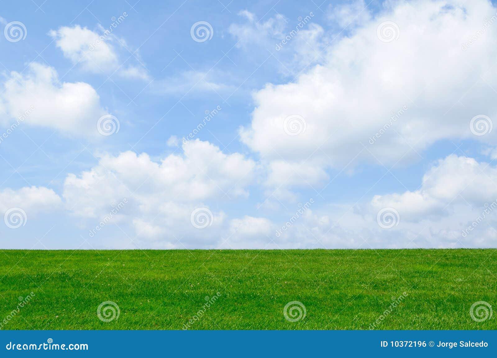 Grama verde, fundo do céu azul