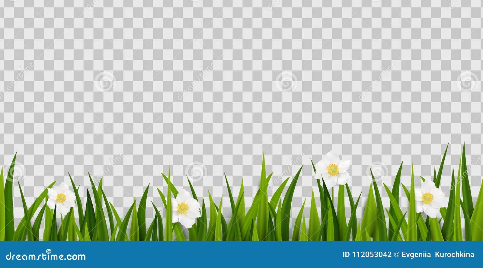 A Grama Verde Sem Emenda Mola Floresce A Beira Isolada No
