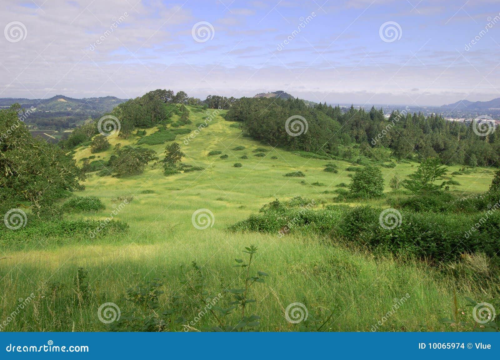 Grame o monte com ontop das árvores da montagem Pisgah