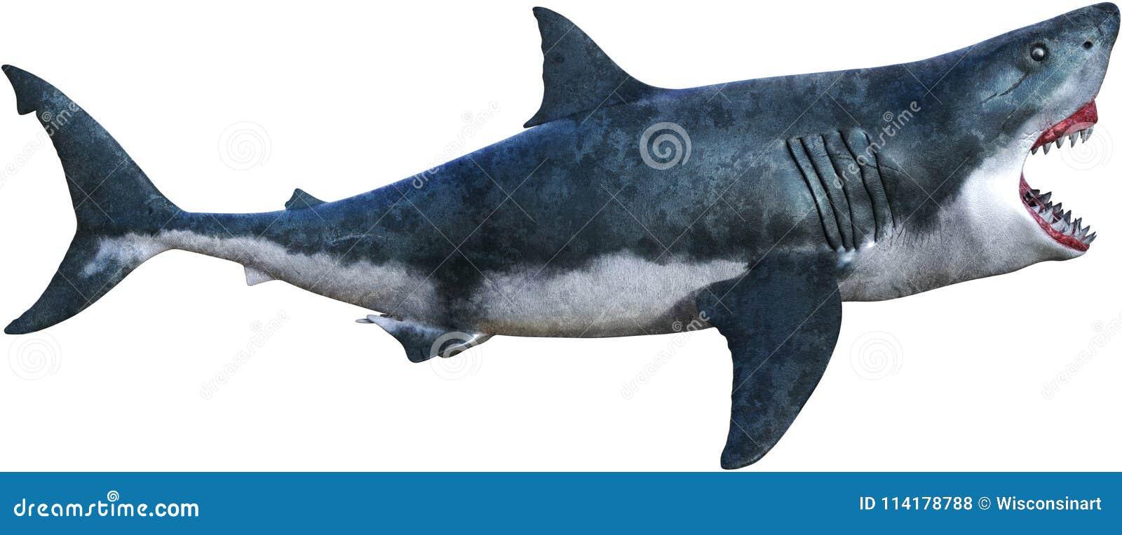 Gran ataque del tiburón blanco aislado