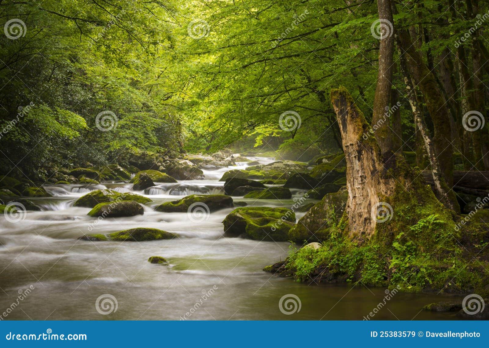 Gran parque nacional pacífico de las montañas ahumadas