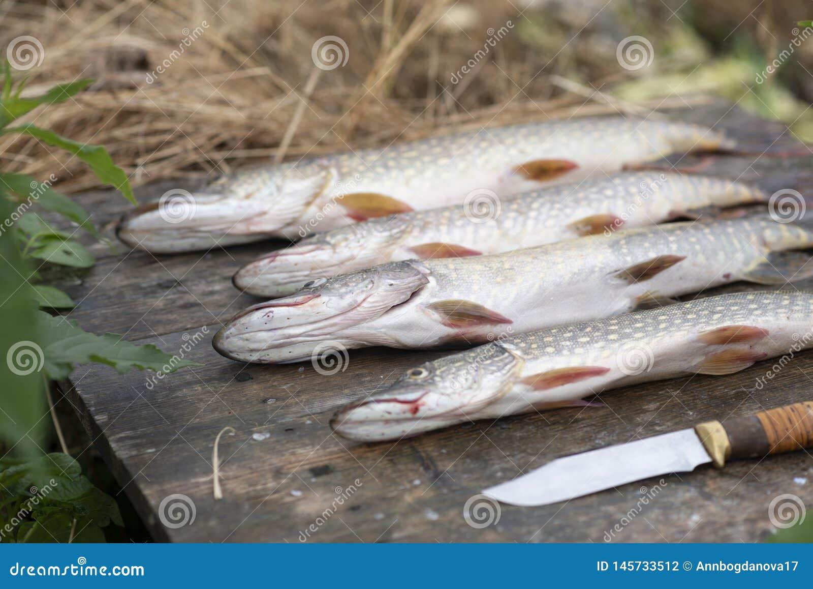 Gran ret?n de pescados lucio