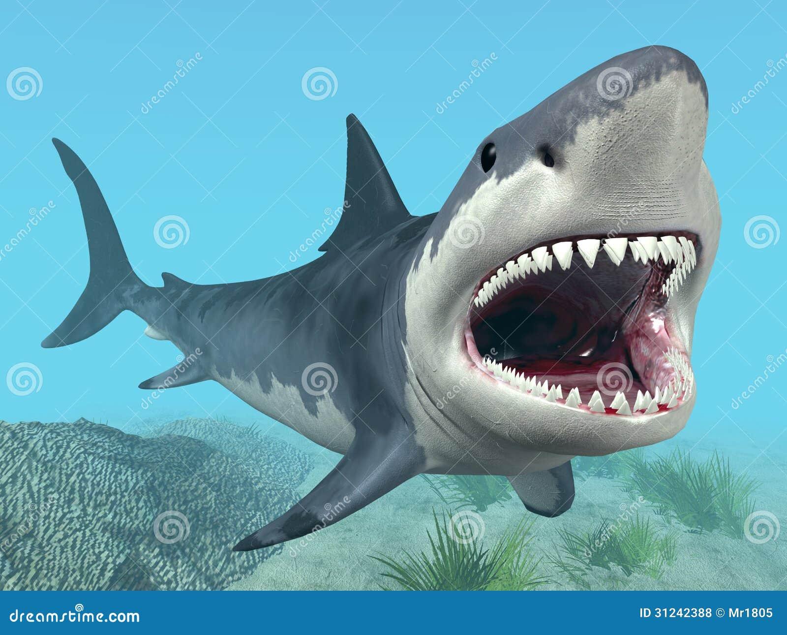 Contemporáneo Anatomía Gran Tiburón Blanco Embellecimiento ...