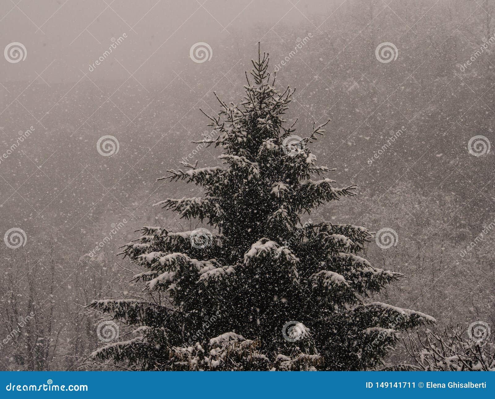 Gran under ett sn?fall