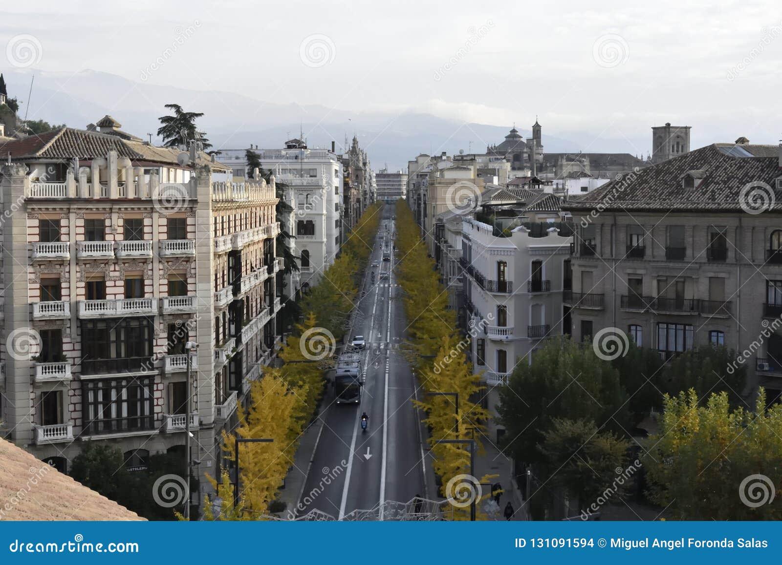 Gran Via de Granada z żółtym jesieni Ginkgo biloba