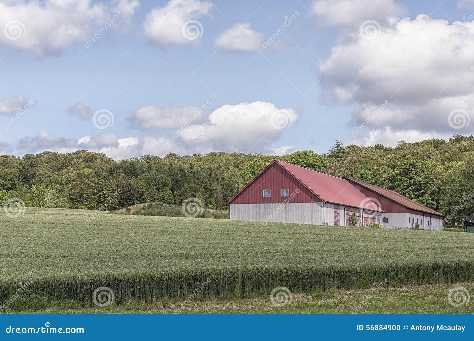 Granaio e campo dell azienda agricola