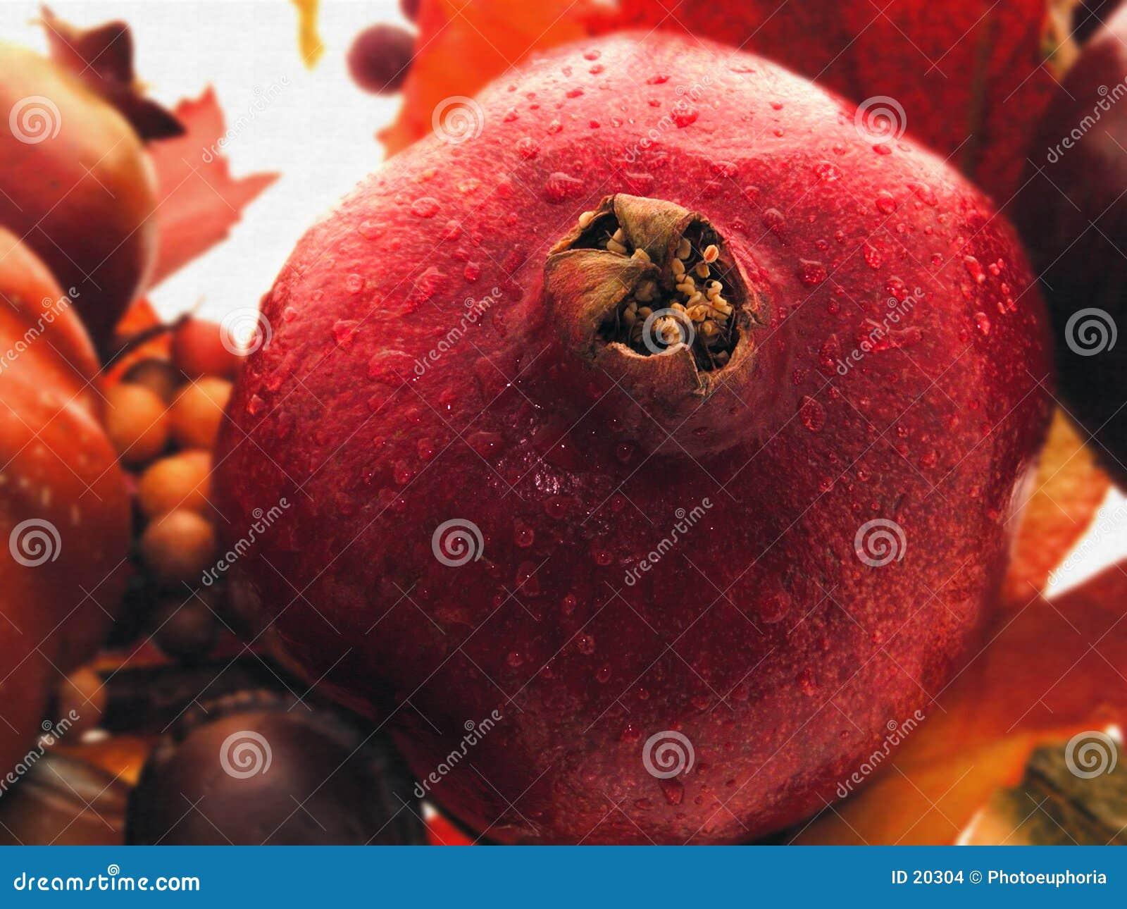 Granatapfel-noch Leben