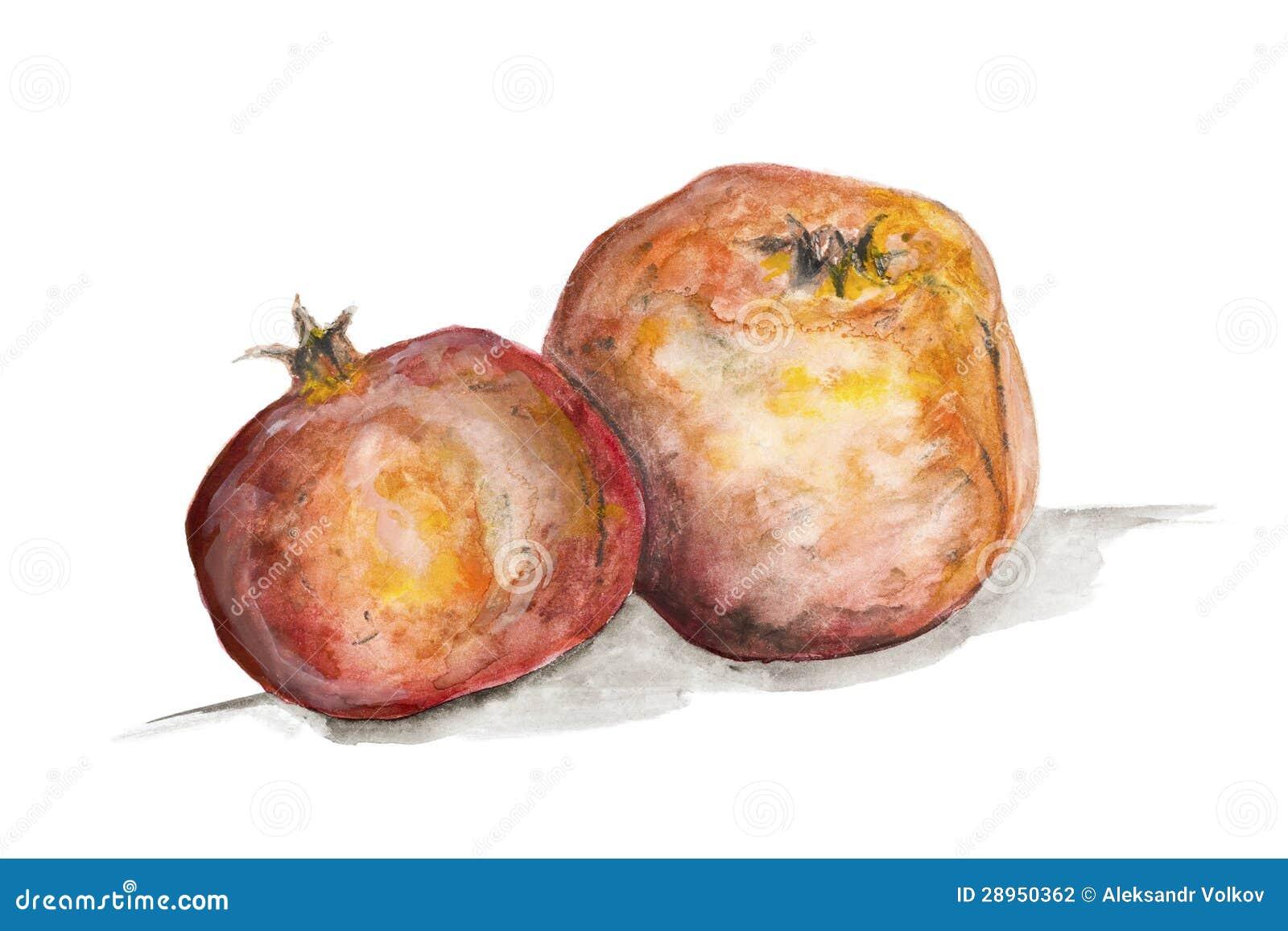 Granatowiec owoc pojęcie