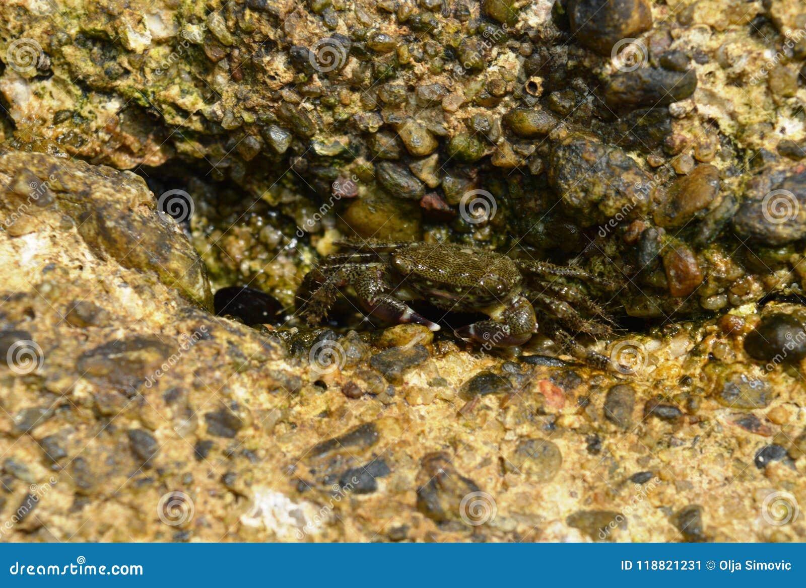 Granchi sulla roccia