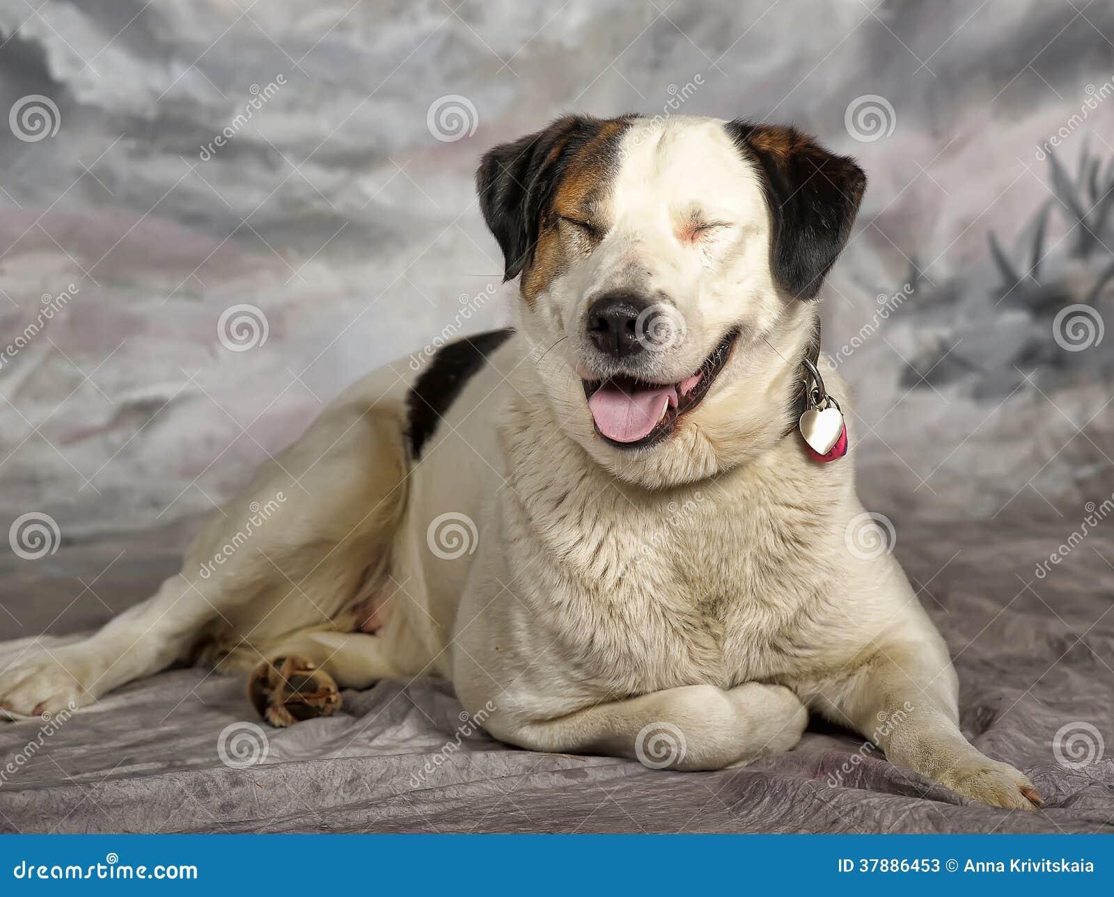 Grand blanc avec le chien métis noir et rouge dans le studio sur un fond d hiver