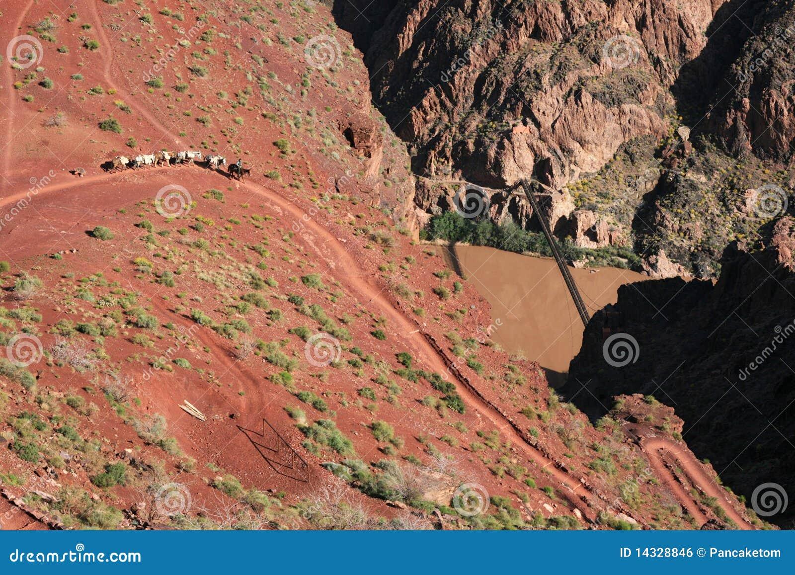 Grand Canyon Mule Train Royalty Free Stock Image - Image ...