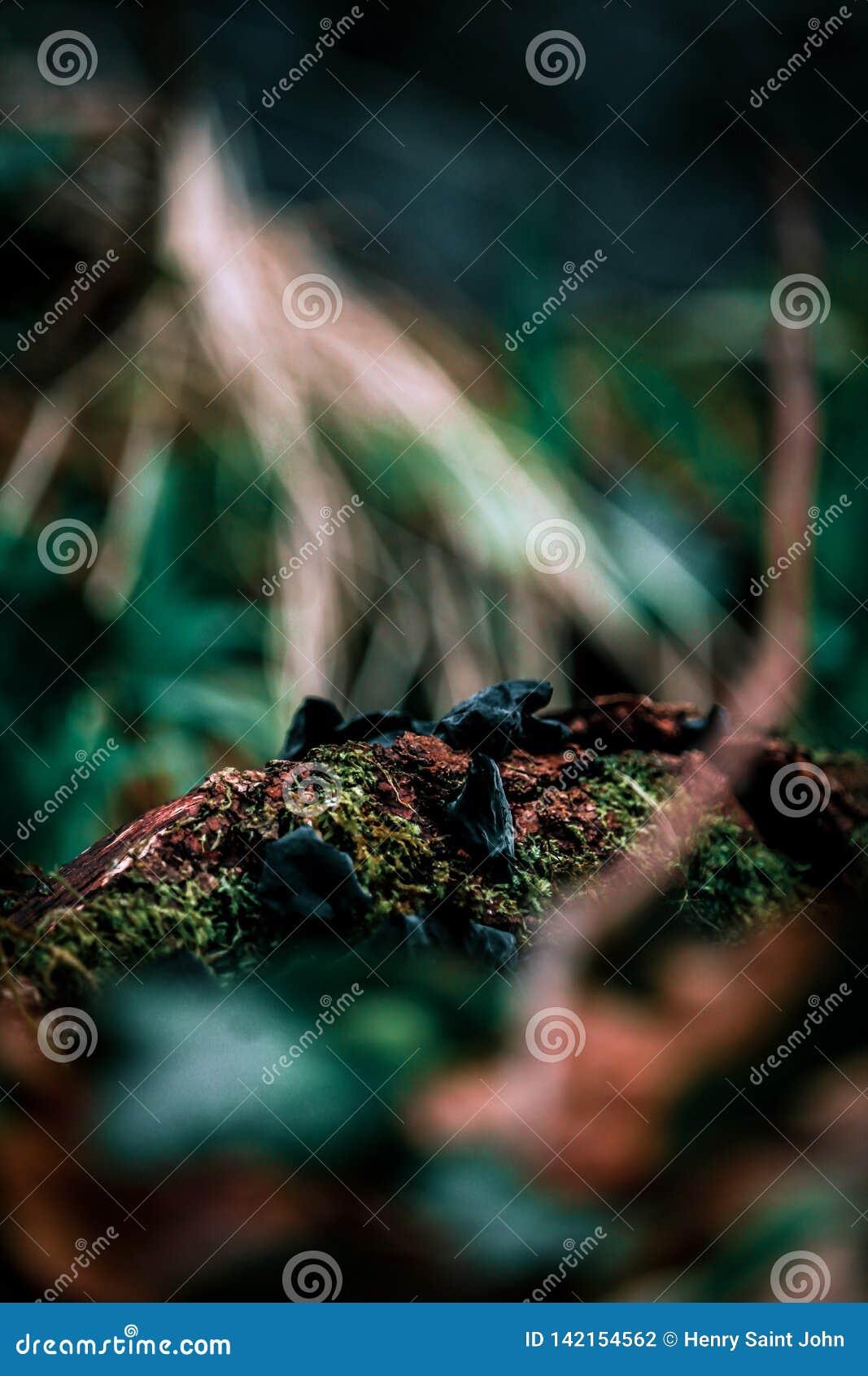 Grand champignon et arbre et le plancher