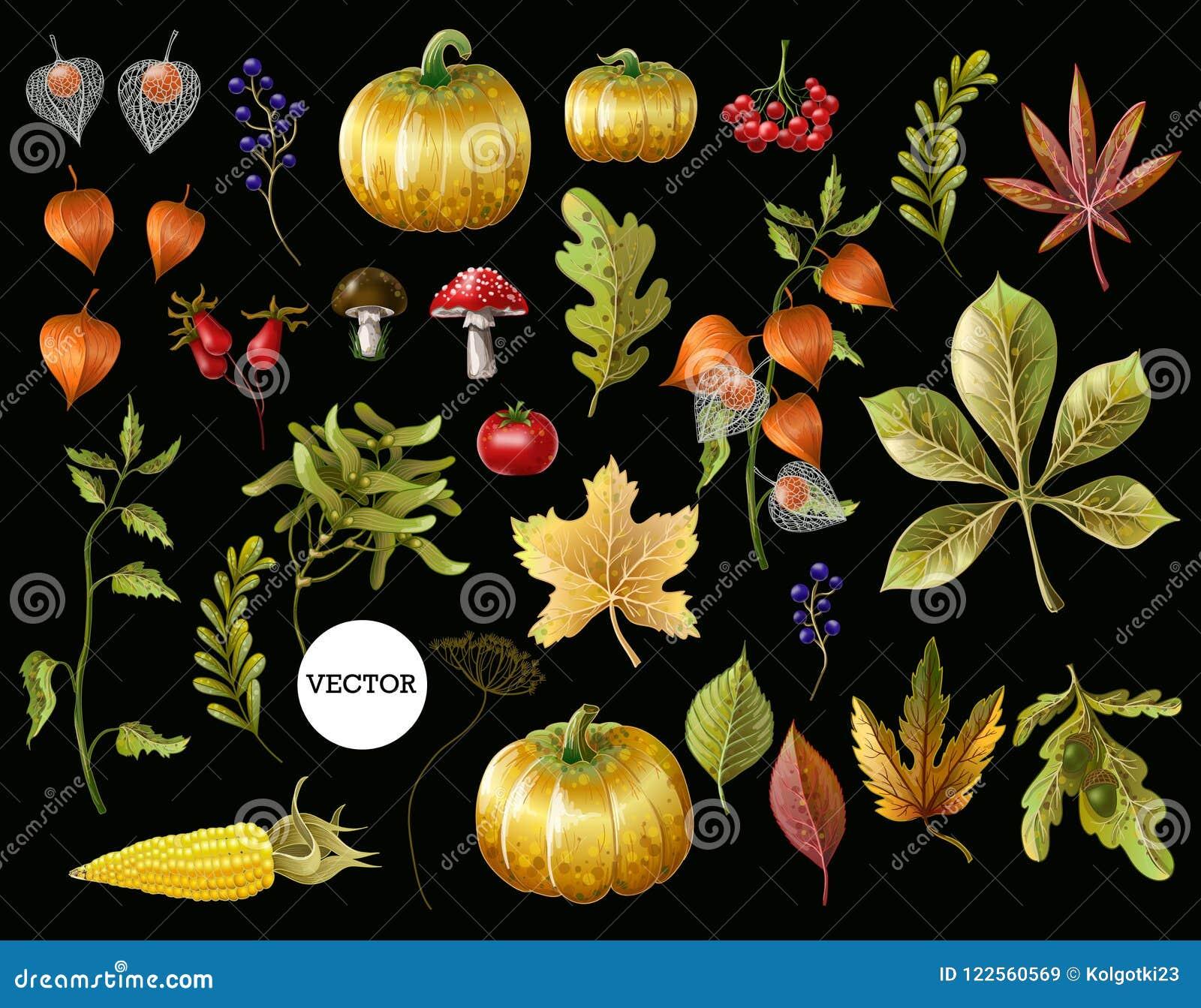 Grand ensemble de feuilles d automne, de fruits, de baies et de légumes Illustration de vecteur