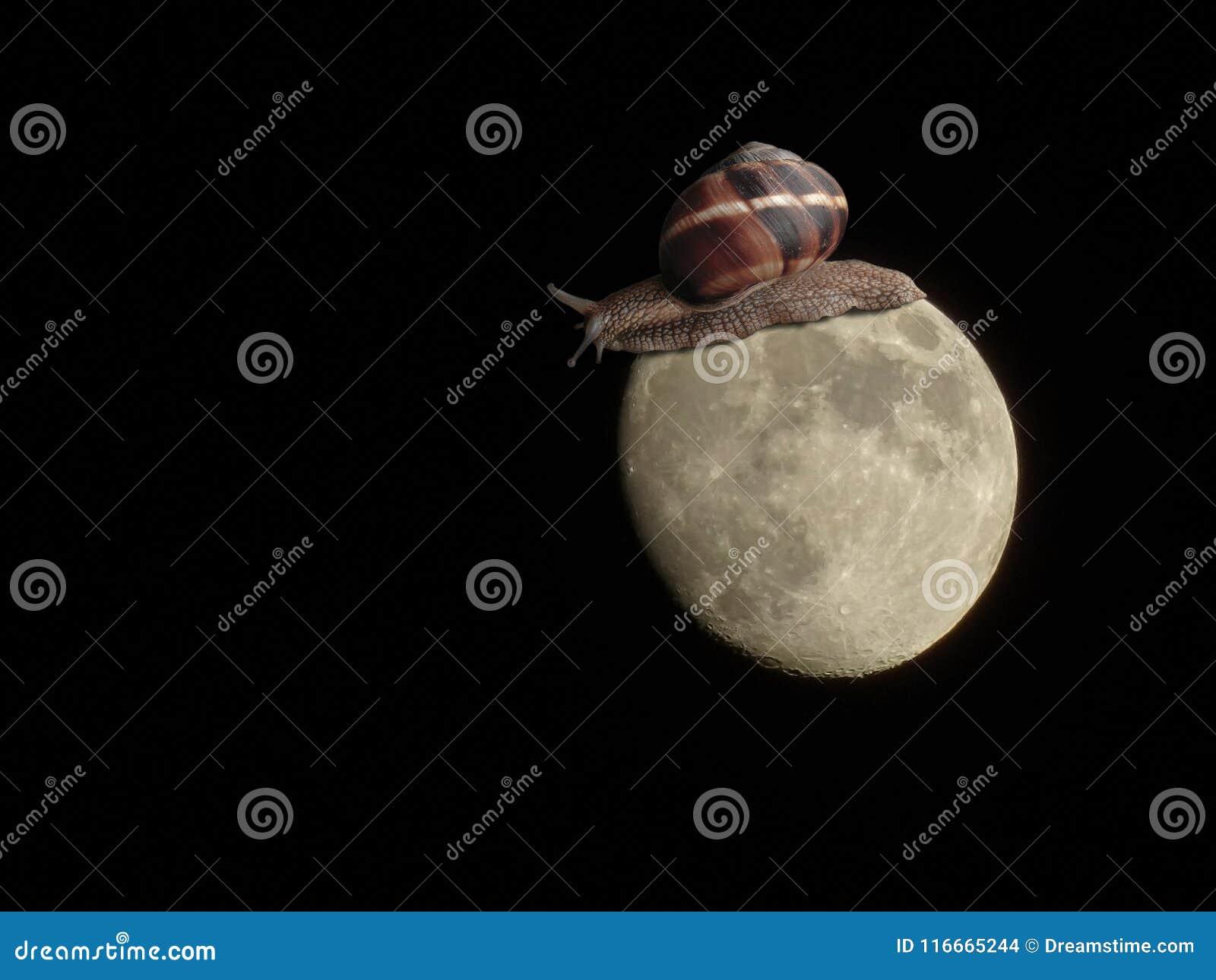 Grand escargot marchant sur la lune