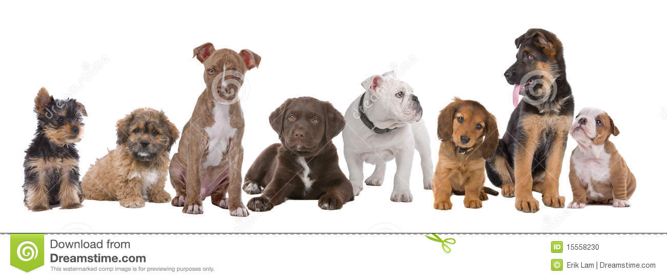 Grand groupe de chiots