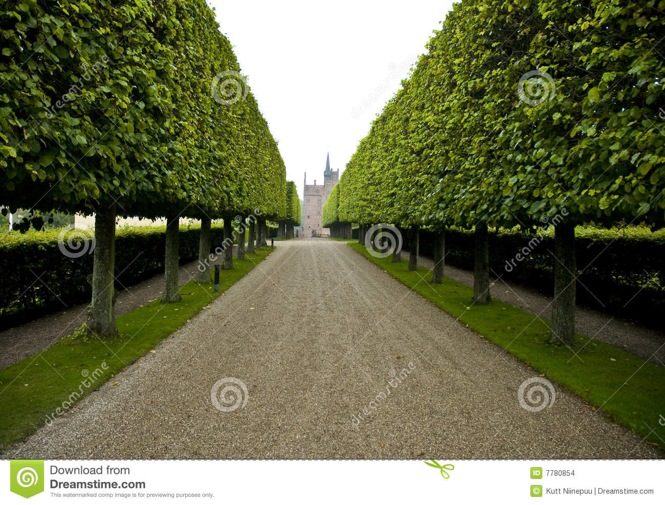 Grand Hedge Lined Driveway Stock Photo Image Of Building