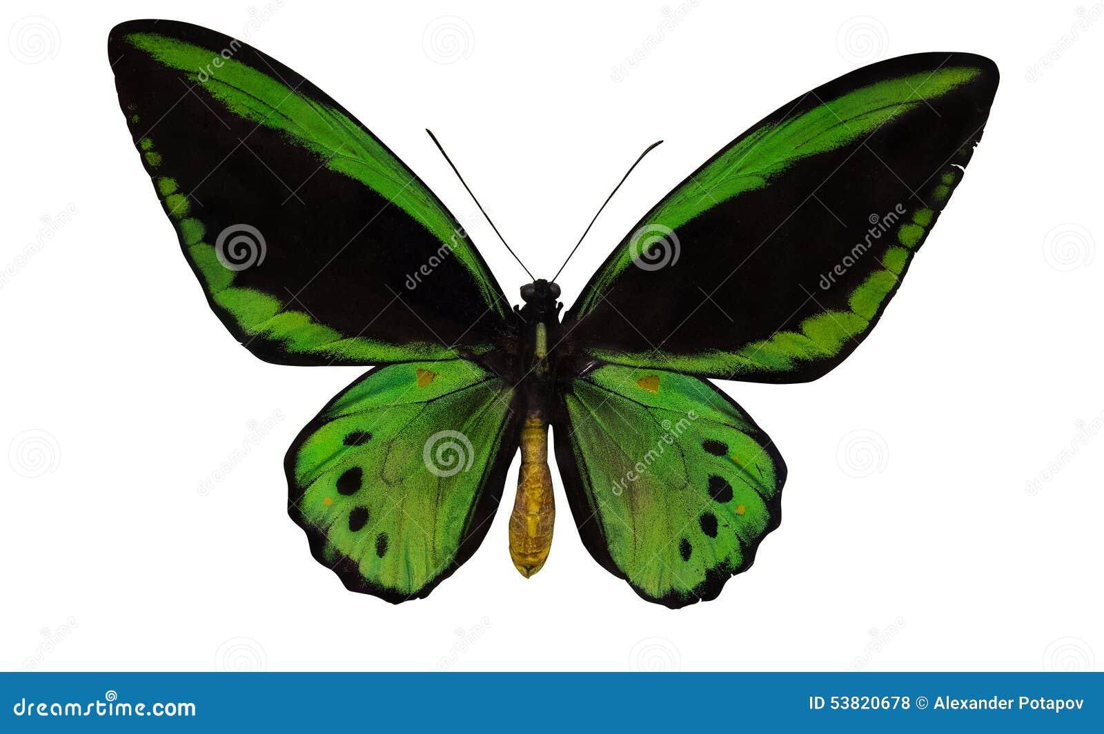 grand papillon vert et noir d 39 isolement sur le blanc photo. Black Bedroom Furniture Sets. Home Design Ideas