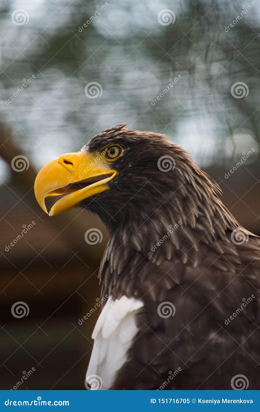 Grand profil d aigle