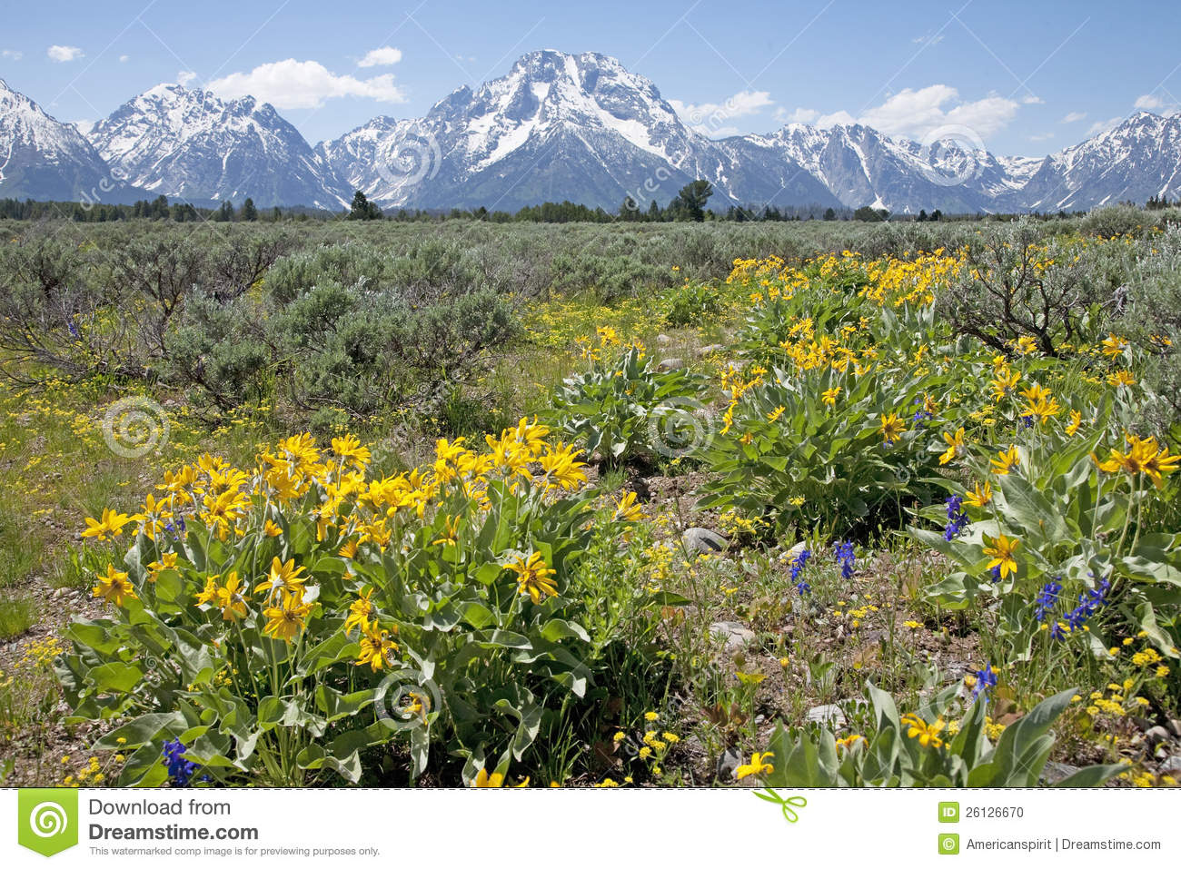 The Grand Teton in the summer