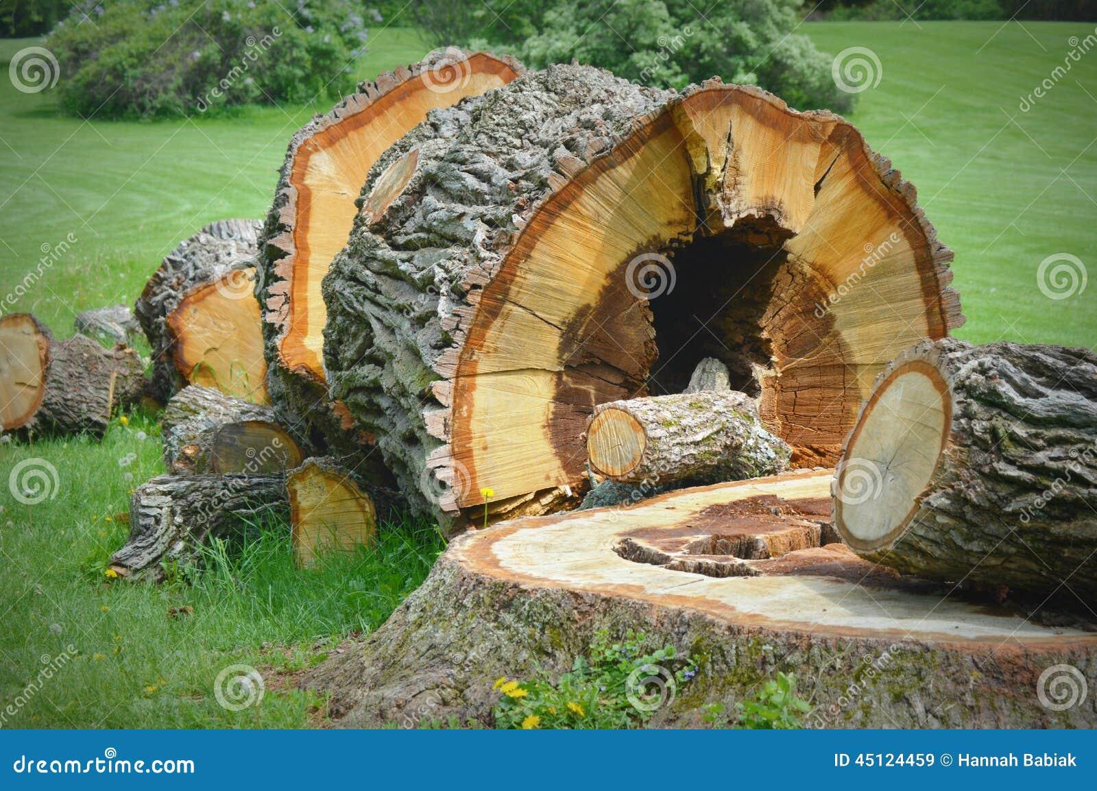 Grand tronçon d arbre tombé