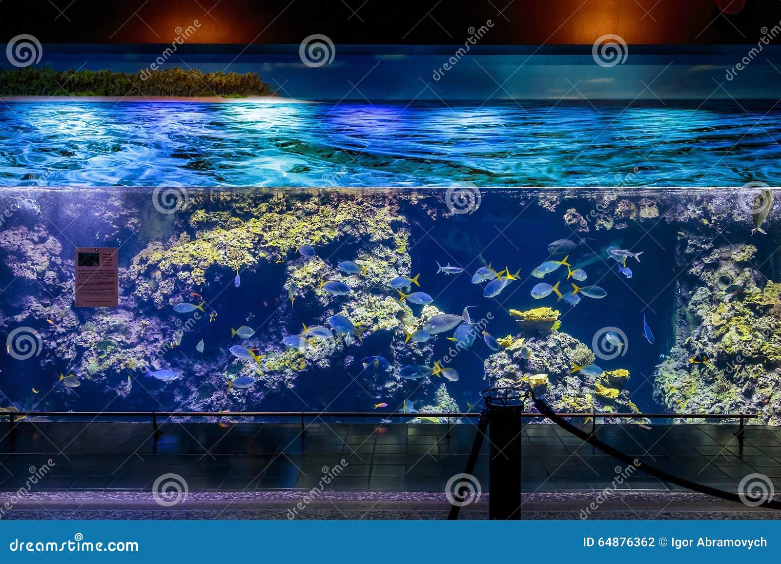 Grande acquario Custo