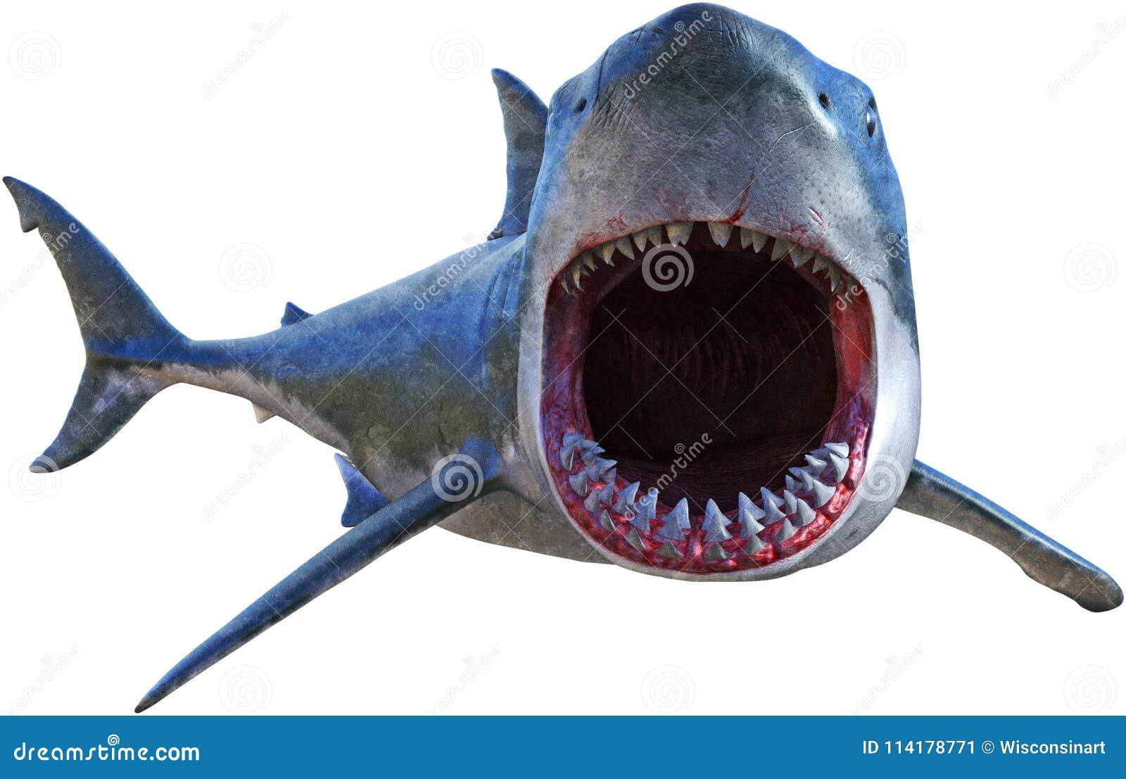 Grande attacco dello squalo bianco isolato