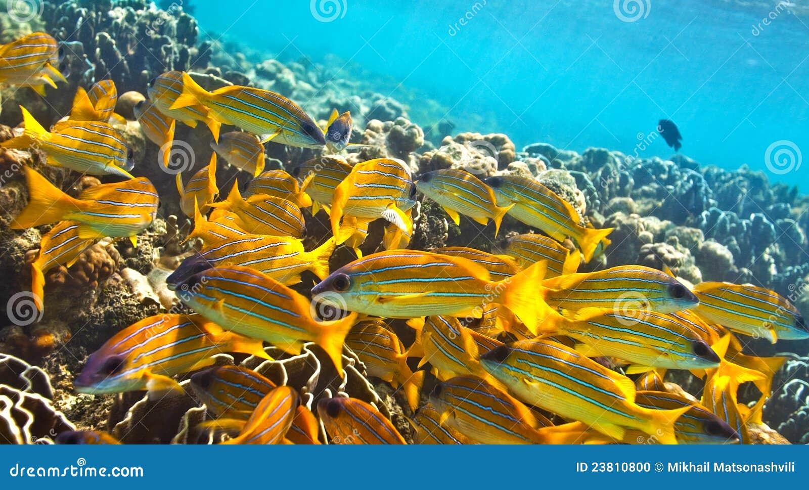 Grande banco dei pesci