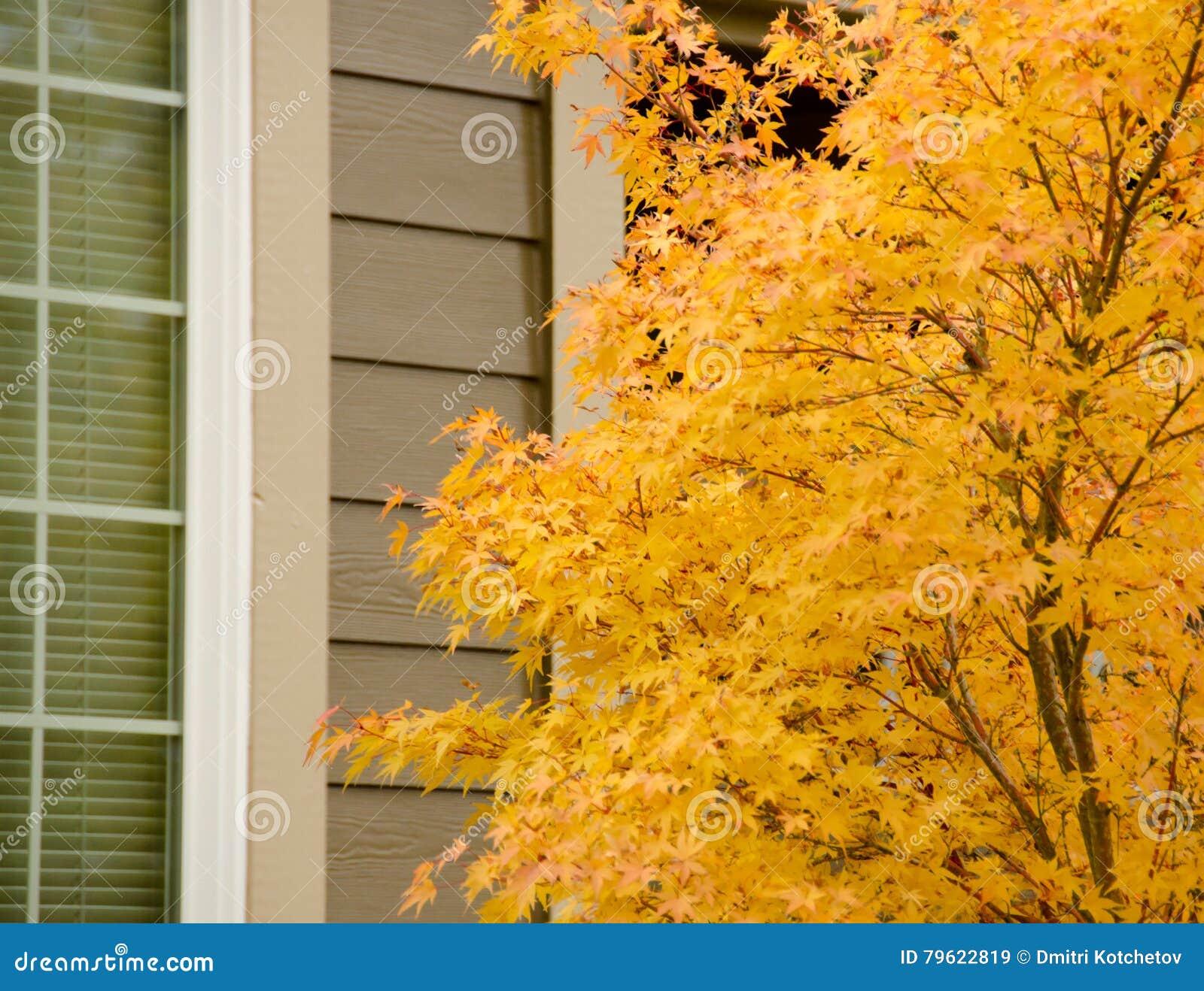 Grande bordo japonês com folha amarela ao lado de uma janela alta