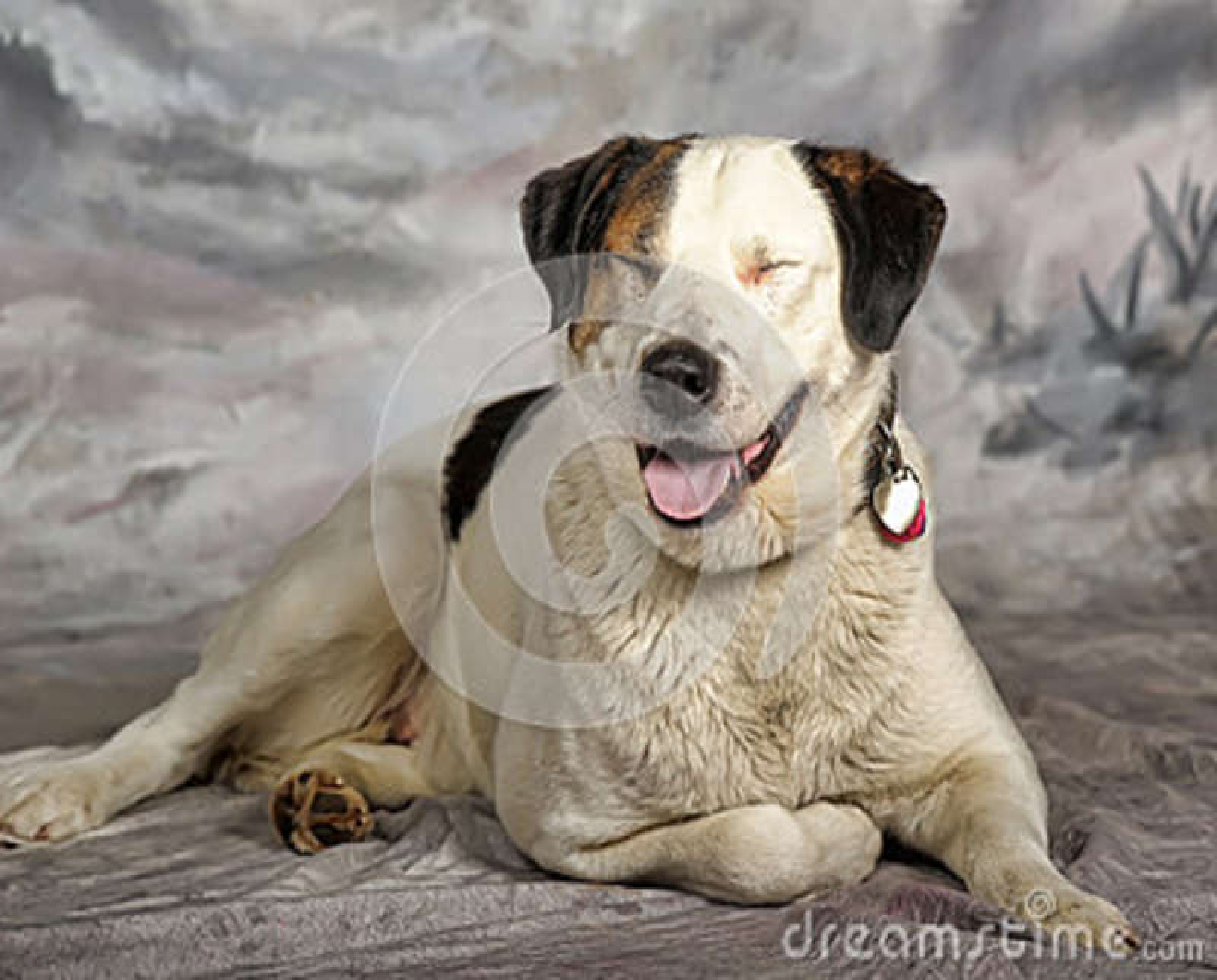 Grande branco com o cão preto e vermelho do híbrido no estúdio em um fundo do inverno