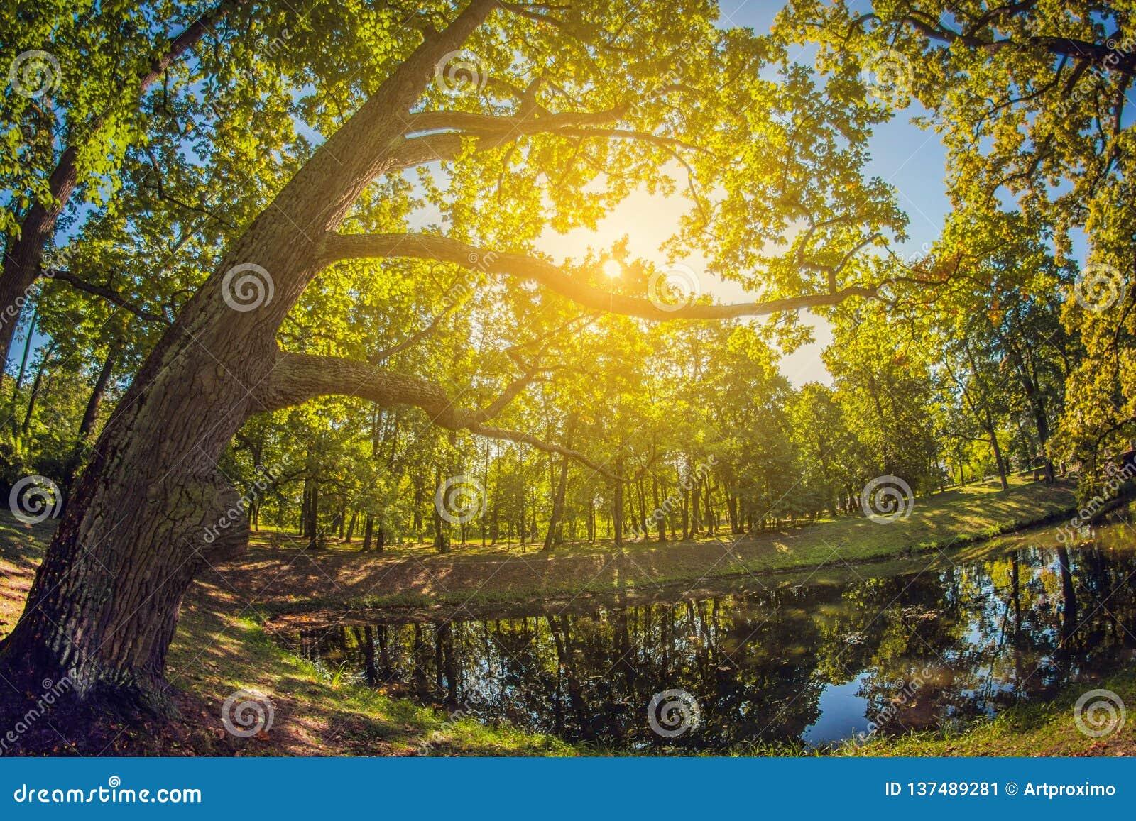 Grande carvalho verde na luz solar Bosque no parque da cidade com lagoa lente de fisheye da perspectiva da distorção