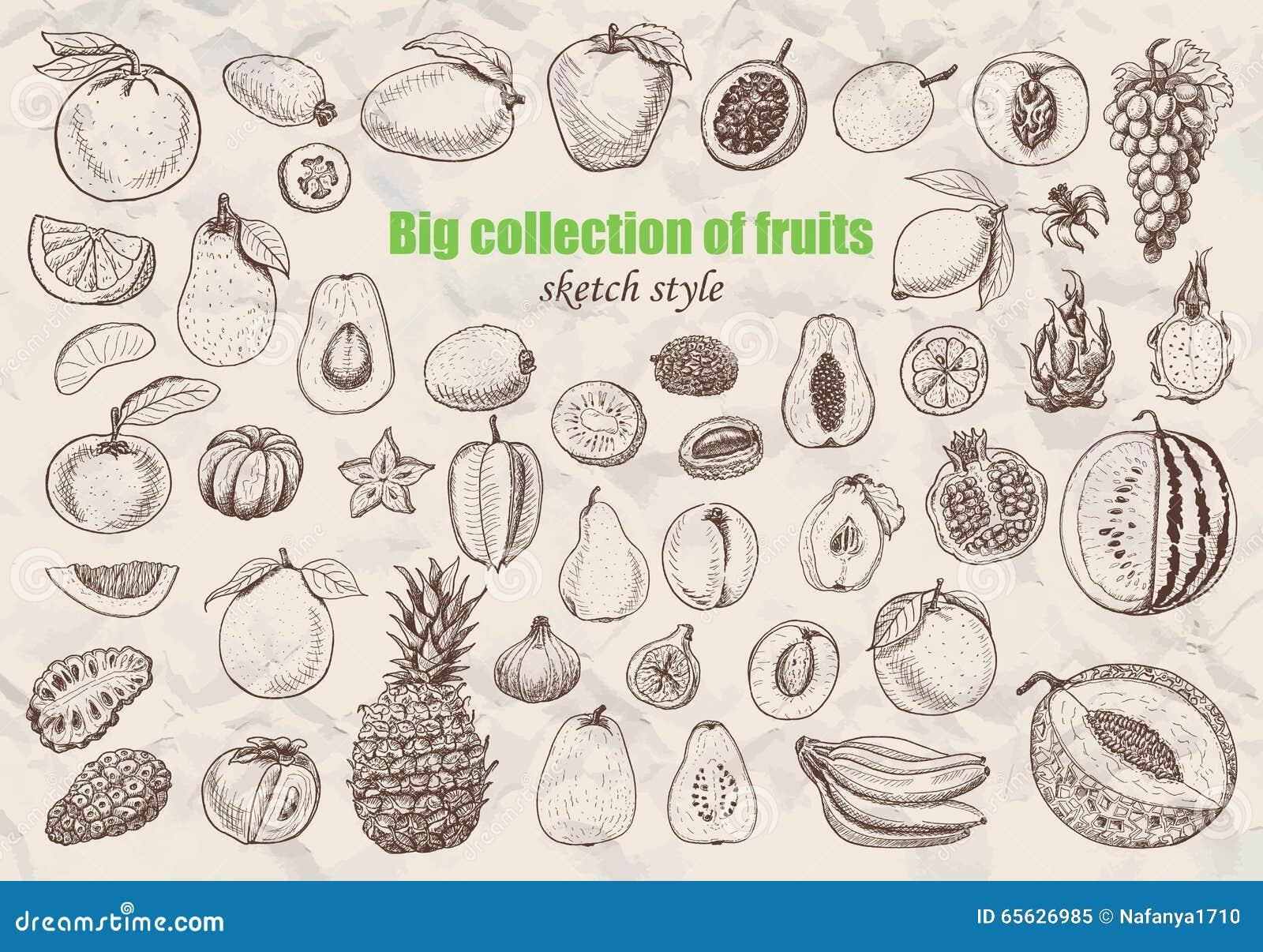 Grande collection de fruits dans le style de croquis
