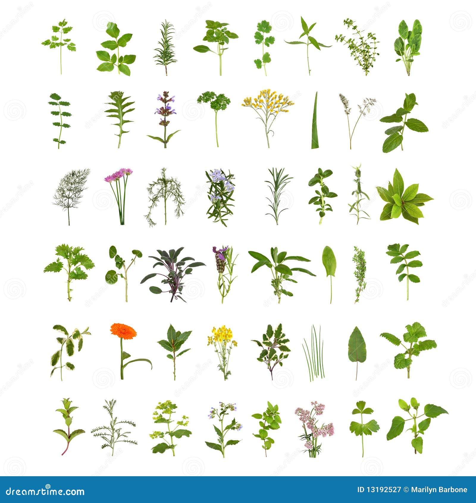 Grande collection de lame et de fleur d herbe