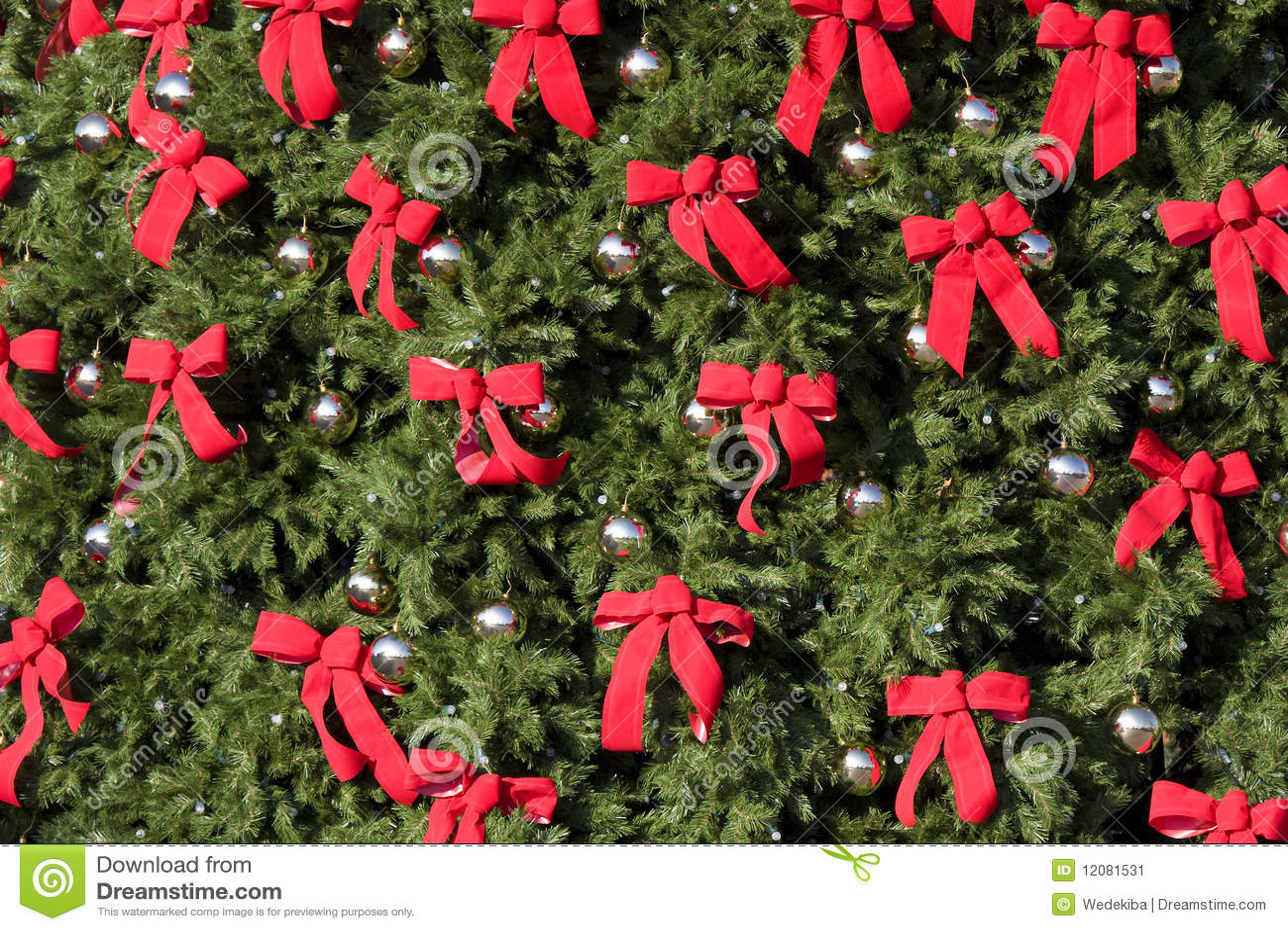 Grande Evergreen con gli archi rossi