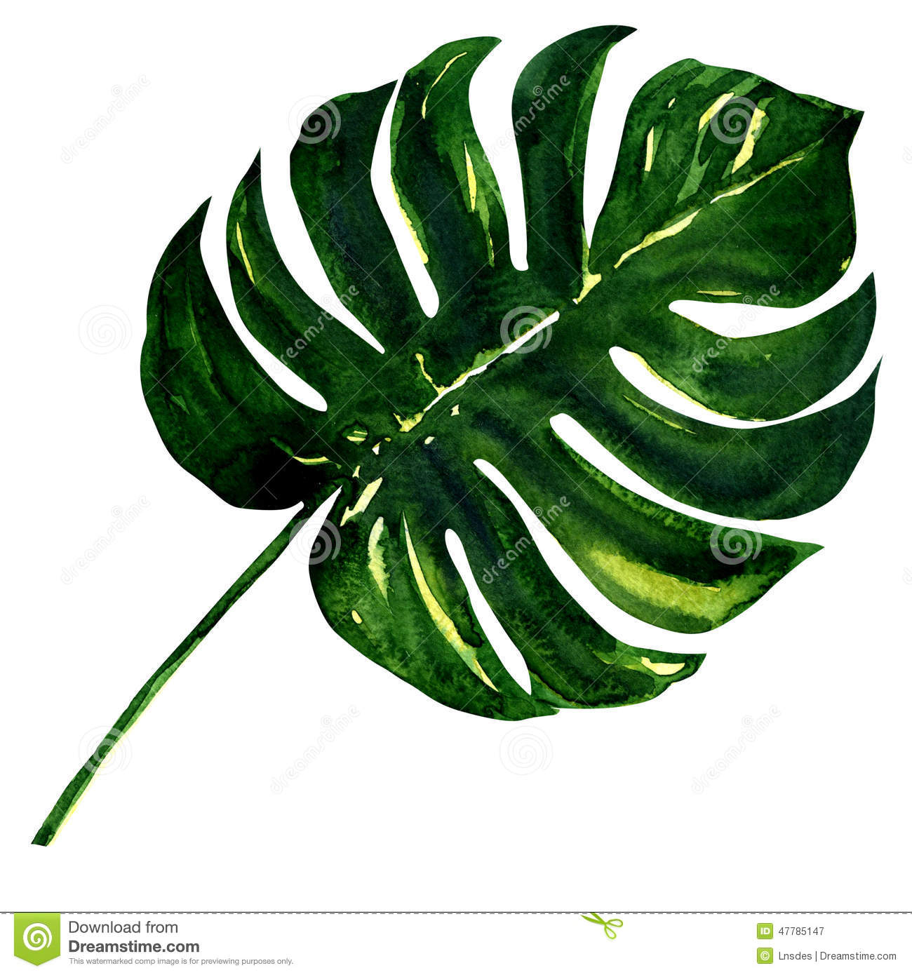 Grande feuille verte d 39 usine de monstera d 39 isolement for Plante grande feuille verte