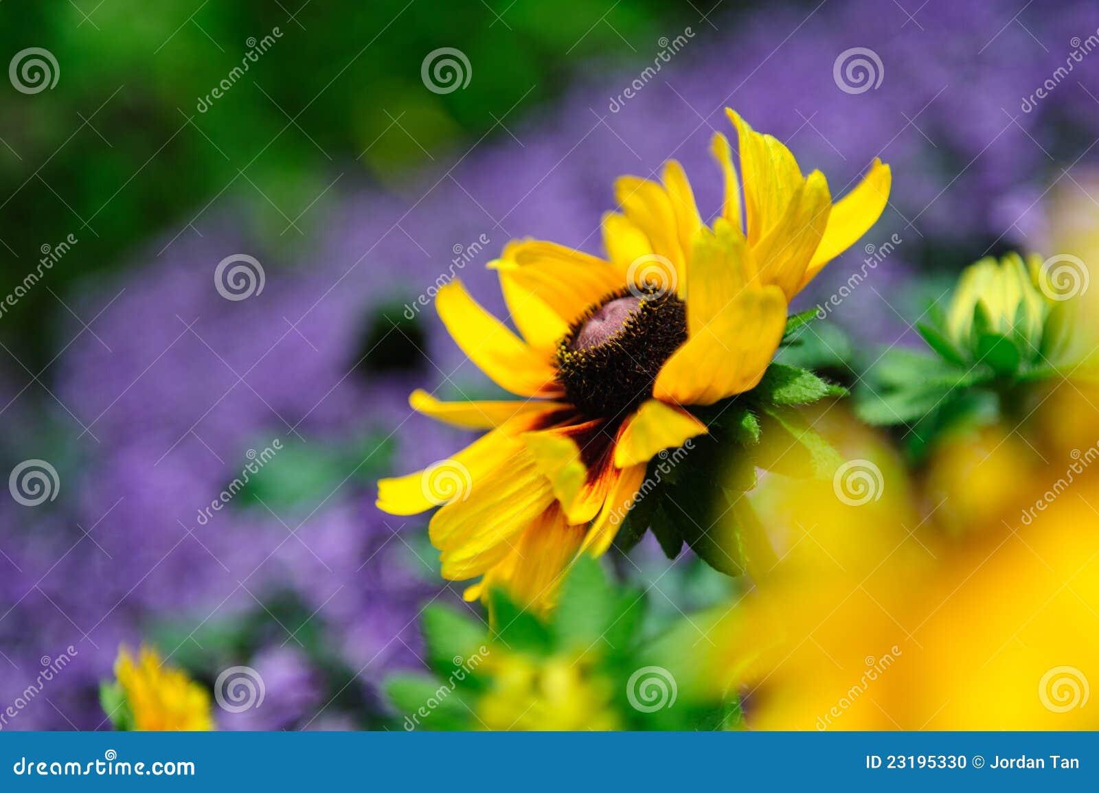 flor de jardim amarela:Vibrant Yellow Flowers