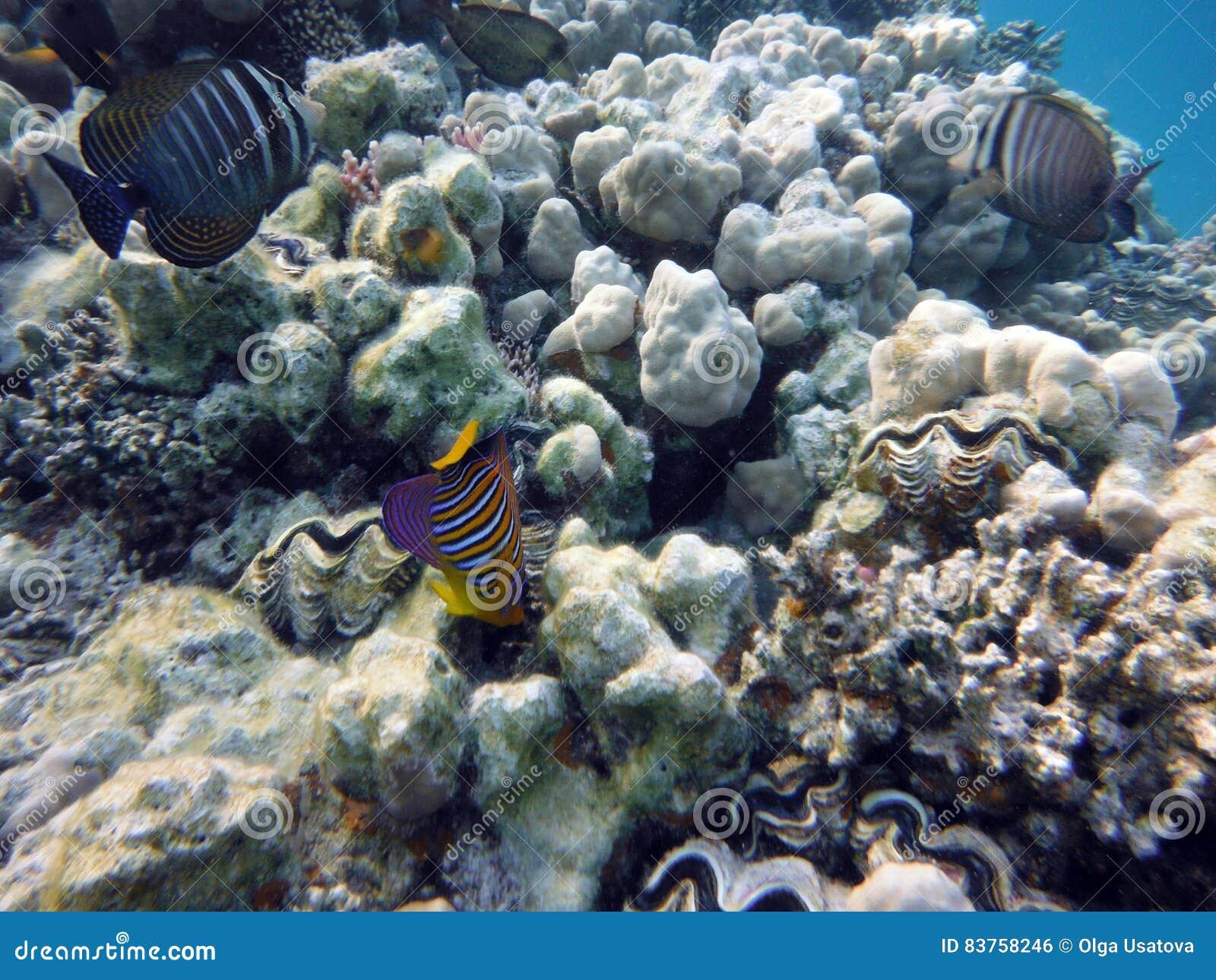 Grande fondale marino della barriera corallina
