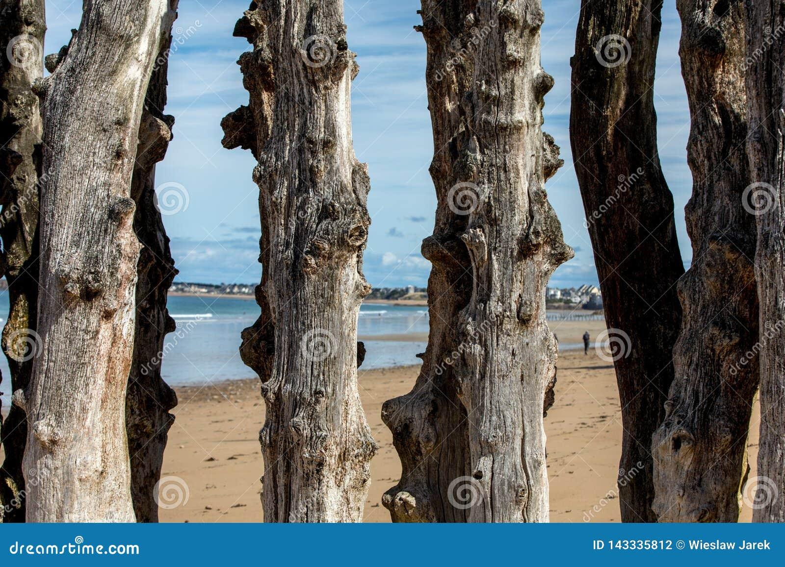 Grande frangiflutti, 3000 tronchi per difendere la città dalle maree, spiaggia di de l Eventail del flocculo in Saint Malo,