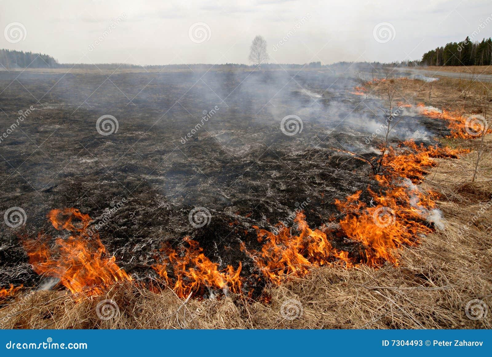 Grande fuoco nel campo di erba asciutta.