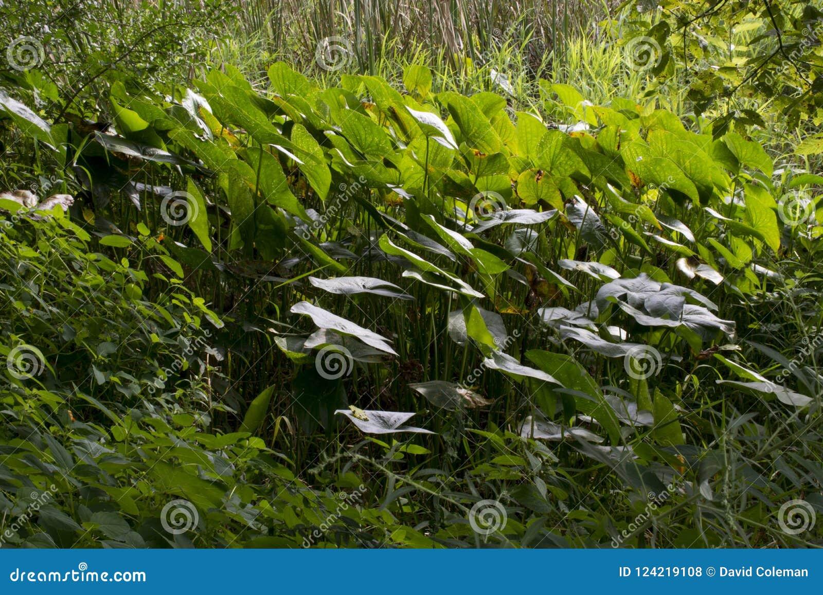 Grande grupo de plantas aquáticas
